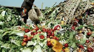 gaspillage recolte alimentaire